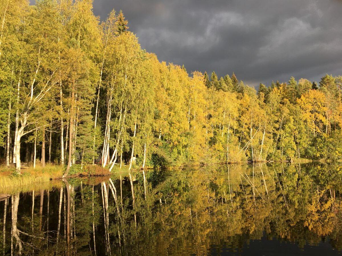 Dorikset, Liesjärvi, Onnenranta, kansallispuisto