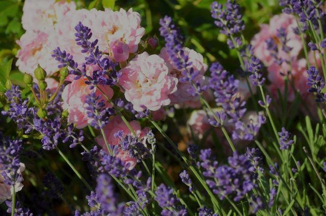 kulkusalla, ruusu, laventeli